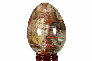 "Buy 4.7"" Colorful, Polished Petrified Wood Egg - Madagascar - #172528"
