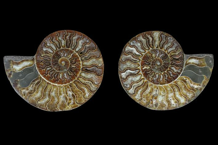"6.1"" Agate Replaced Ammonite Fossil (Pair) - Madagascar"