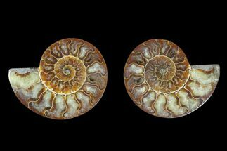 "4.2"" Agate Replaced Ammonite Fossil (Pair) - Madagascar For Sale, #166850"