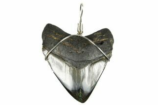 "1.97"" Fossil Megalodon Tooth Necklace For Sale, #173825"
