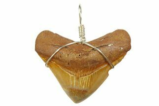 "Buy 1.72"" Fossil Megalodon Tooth Necklace - #173866"