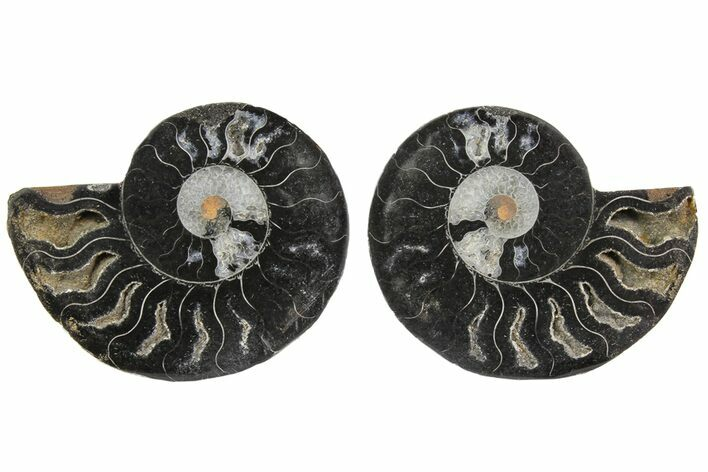 "3.1"" Cut/Polished Ammonite Fossil (Pair) - Unusual Black Color"