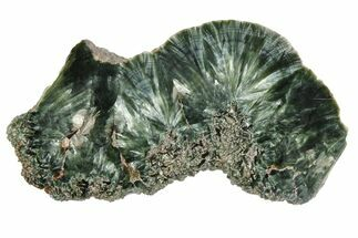 Clinochlore var. Seraphinite - Fossils For Sale - #174834
