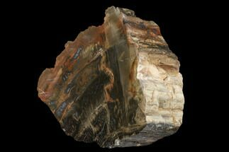 "Buy 5.7"" Polished, Petrified Wood (Araucarioxylon) - Red and Black - #176992"