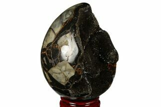 Septarian with Calcite  - Fossils For Sale - #177414