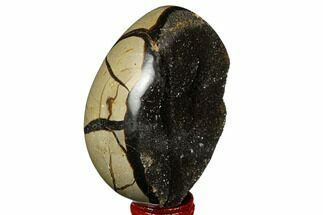 "Buy 3.6"" Septarian ""Dragon Egg"" Geode - Black Crystals - #177394"