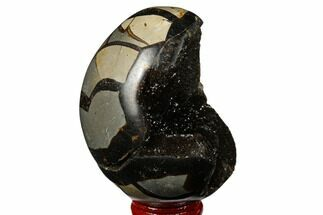 "3.25"" Septarian ""Dragon Egg"" Geode - Black Crystals For Sale, #177398"