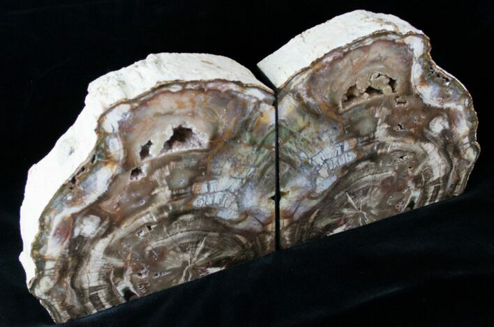 "Madagascar Petrified Wood Bookends - 7.8"" Tall, 8.4"" Wide"