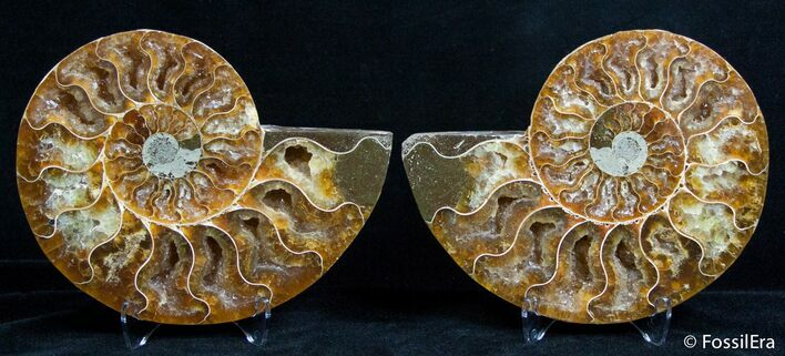 4.65 Inch Split Ammonite Pair