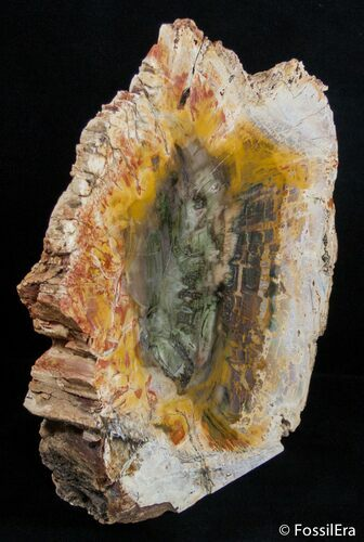 Large Richly Colored Petrified Wood Slab - Madagascar