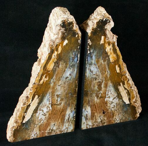 "Hubbard Basin Petrified Wood Bookends - 9.3"" Tall"