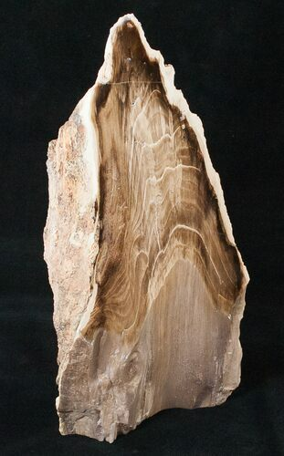 "9.4"" Free-Standing Petrified Wood (Conifer) - McDermitt, OR"