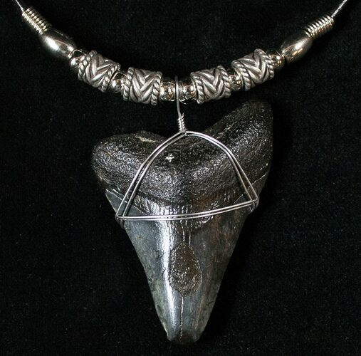 "2 1/4"" Megalodon Tooth Necklace"