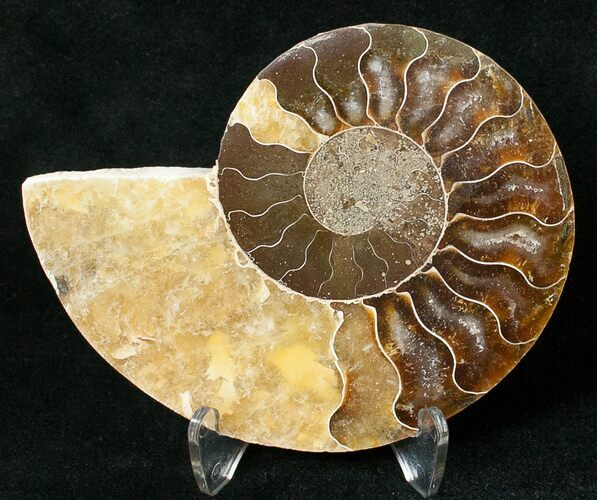 "3.32"" Ammonite Fossil (Half) - 110 Million Years"